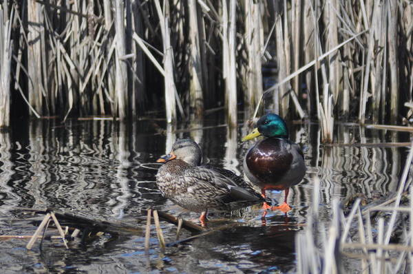 Greenhead Photograph - Our Pond by Brent Easley