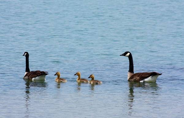 Photograph - Out For A Swim by Sheila Brown