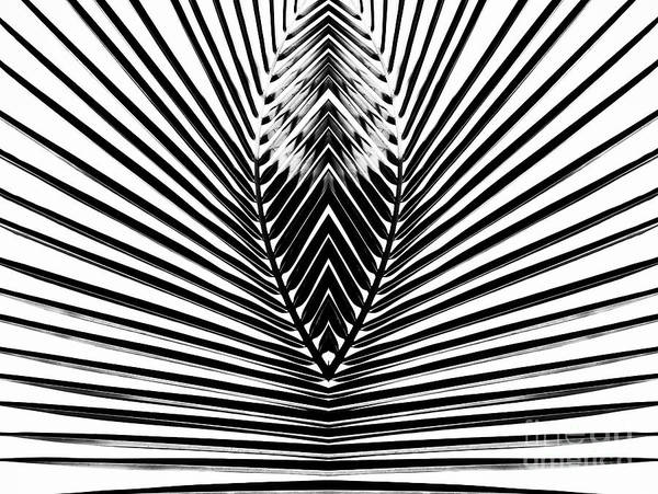 Wall Art - Photograph - Out From Within by Tim Gainey