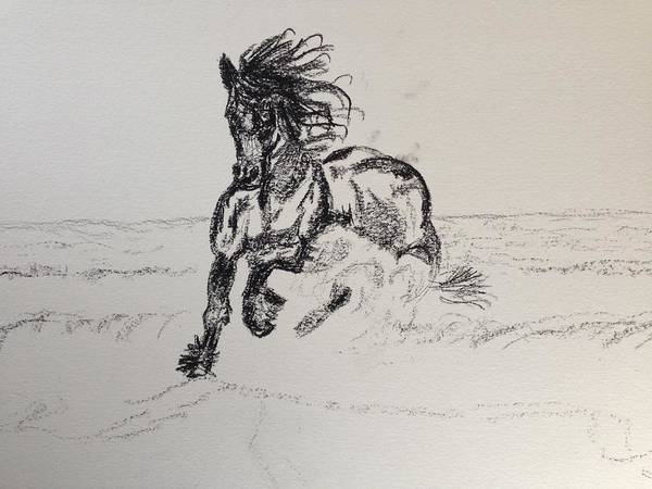 Friesian Drawing - Out Of Darkness Comes Strength by Christine Mertin