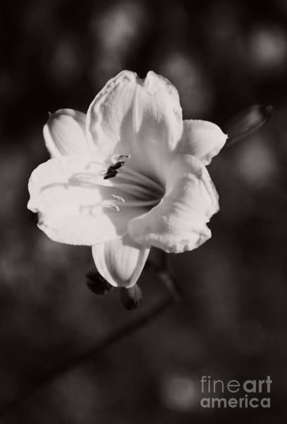 Photograph - Out Of Darkness Into Light - Wbw by Linda Shafer