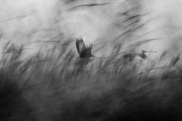 Wild Bird Photograph - Out Of The Blue by Elior Segev