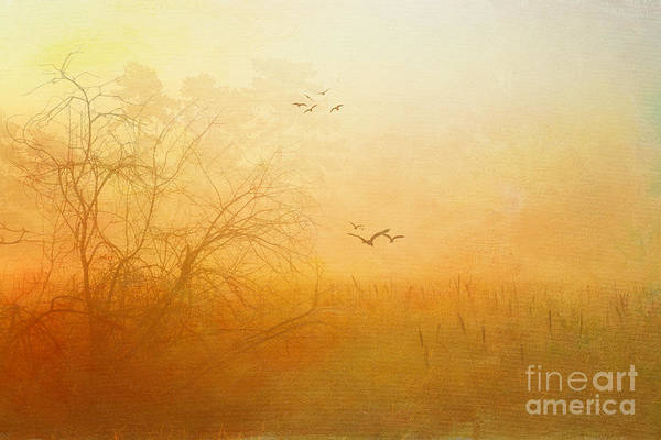 Photograph - Out Of The Mist by Beve Brown-Clark Photography