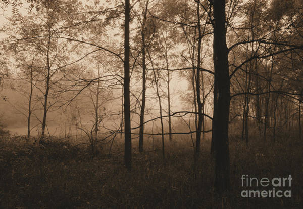 Photograph - Out Of The Woods by Charles Owens