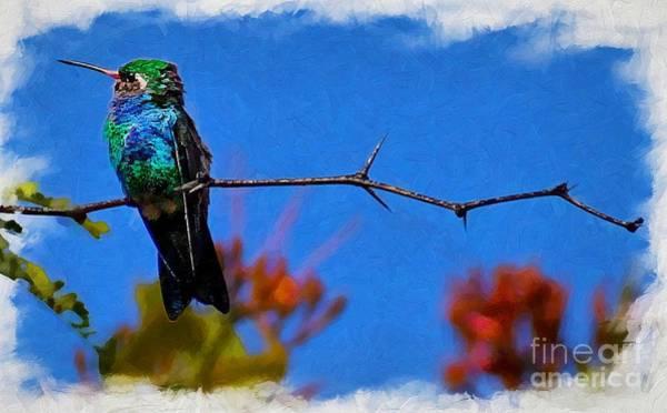 Photograph - Out On A Branch by John Kolenberg