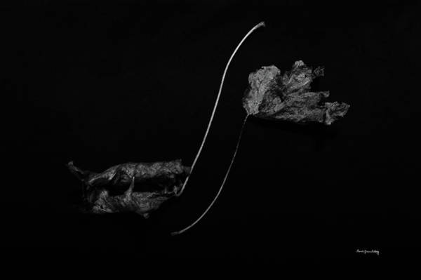 Photograph - Out With A Swirl by Randi Grace Nilsberg