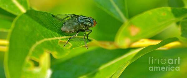 Photograph - Outdoor Fly by Vivian Martin