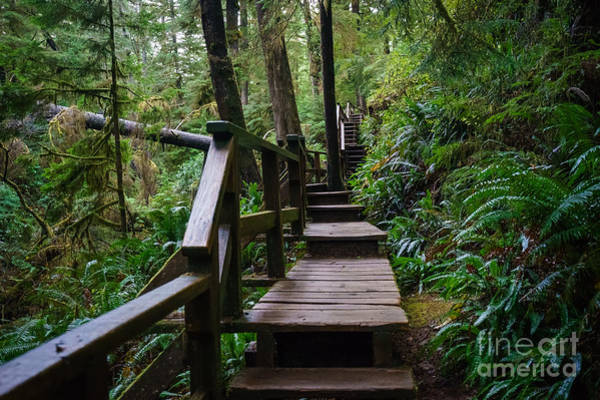 Photograph - Outdoor Stair Master by Carrie Cole