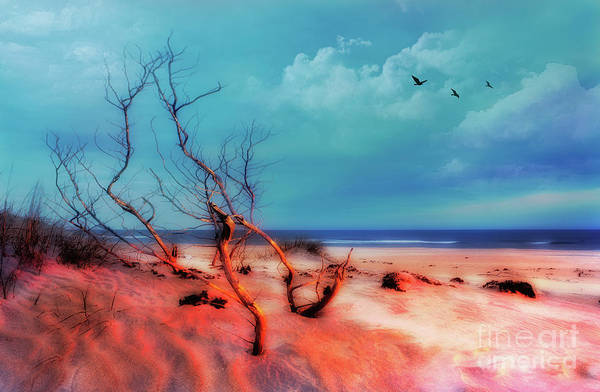 Wall Art - Photograph - Outer Banks Stormy Flight At Sunrise by Dan Carmichael