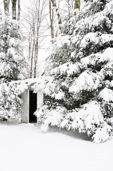 Toilet Photograph - Outhouse In Pines by Thomas R Fletcher