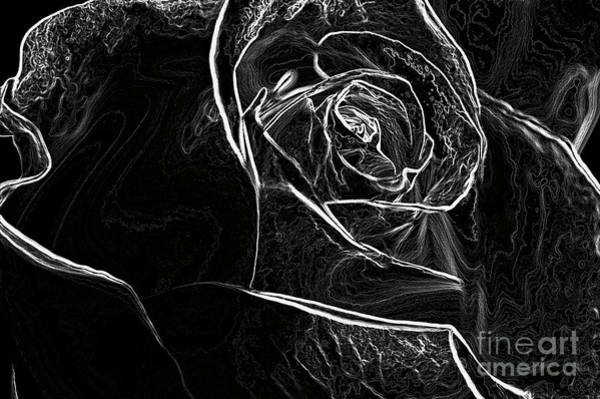 Wall Art - Photograph - Outline Of A Rose by Micah May