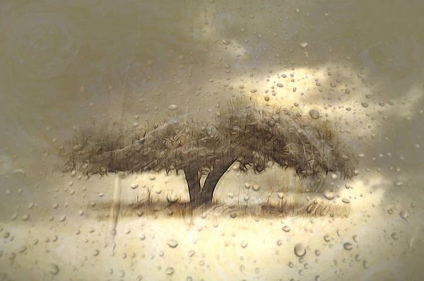 Photograph - Outside My Window by Phyllis Meinke