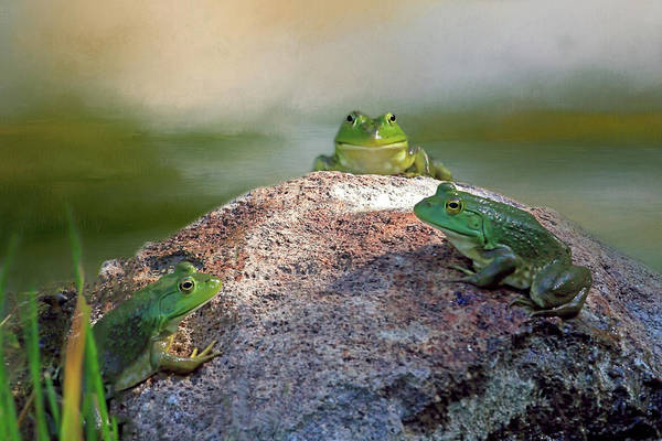 Bullfrog Photograph - Oval Office Meeting by Donna Kennedy