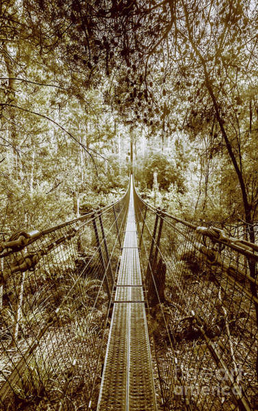 Suspension Bridge Photograph - Over Australian Native Forests by Jorgo Photography - Wall Art Gallery