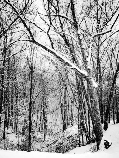 Photograph - Over The Meadow And Through The Woods by Kendall McKernon