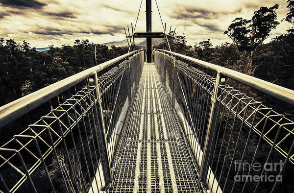 Suspension Bridge Photograph - Over The Tahune Treetops by Jorgo Photography - Wall Art Gallery