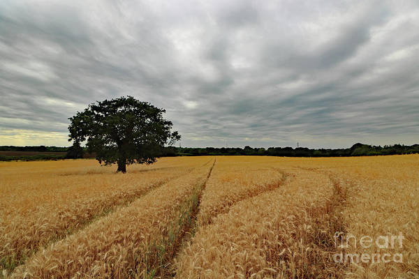 Photograph - Overcast Skies With Wheat Field by Julia Gavin