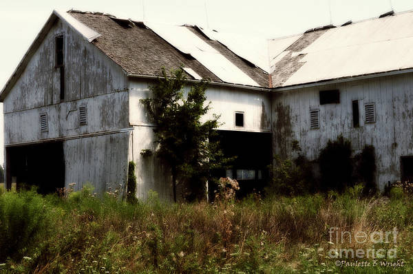 Photograph - Overgrown by Paulette B Wright