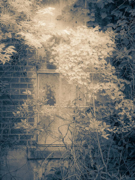 Wall Art - Photograph - Overgrowth On Abandoned Pumping Station by Carol Fox Henrichs