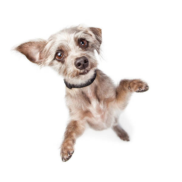 Crossbreed Wall Art - Photograph - Overhead View Of Standing Cute Dog by Susan Schmitz