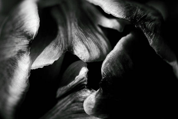 Photograph - Overlap-black And White by Brian Pflanz