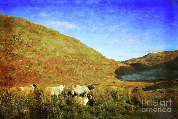Haweswater Wall Art - Photograph - Overlooking Haweswater by Linsey Williams