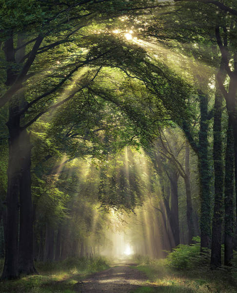 Photograph - Overture by Rob Visser