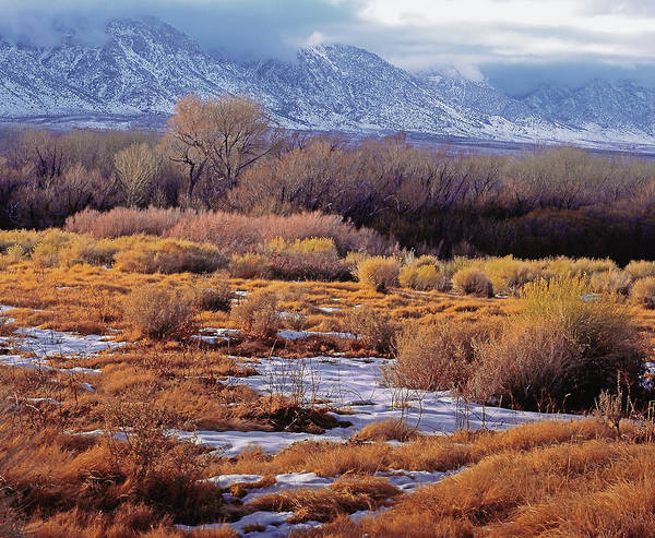 Photograph - Owens Valley Look by Paul Breitkreuz