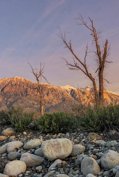 Photograph - Owens Valley Morning by Loree Johnson