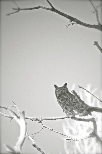 Photograph - Owl Be Seeing You by Cindy Schneider
