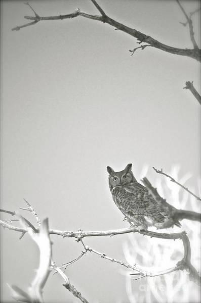Owl Be Seeing You Art Print
