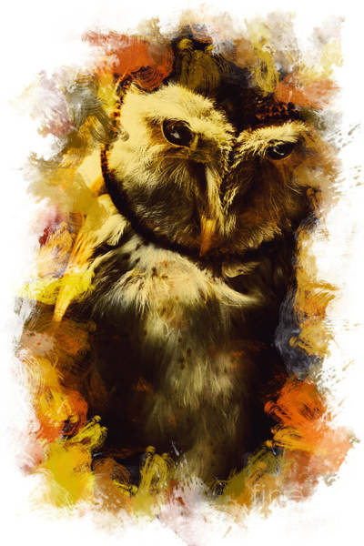 Photograph - Owl Birds Of The Night by Jorgo Photography - Wall Art Gallery