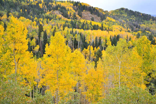Photograph - Owl Creek Pass Colors by Ray Mathis