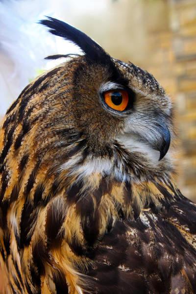 Owl-cry Art Print