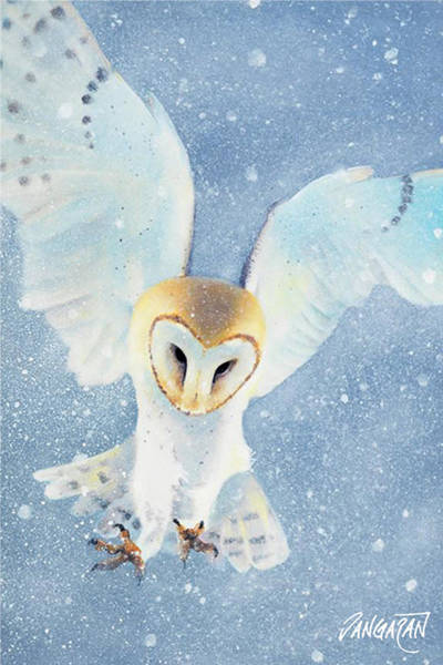 Barn Owl Painting - Owl Detail by Tim Dangaran