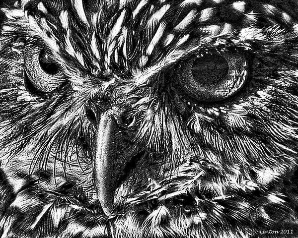 Digital Art - Owl Eyes by Larry Linton