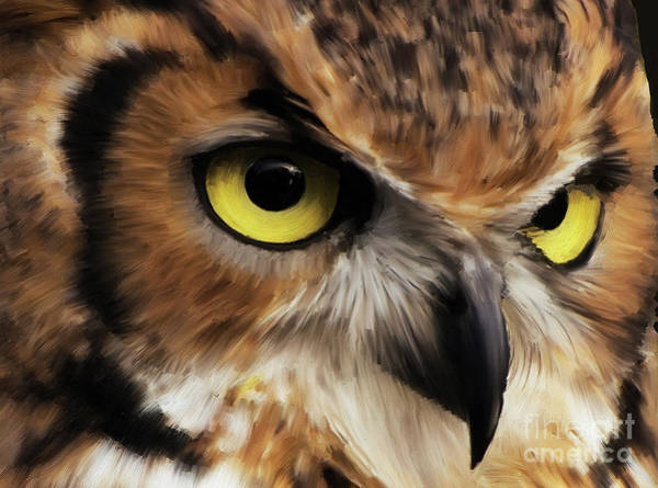 Wall Art - Painting - Owl Face by Gull G