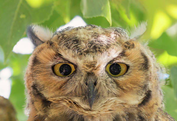 Photograph - Owl Face by Loree Johnson