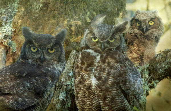Wall Art - Photograph - Owl Family by Angie Vogel