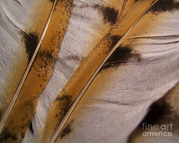Photograph - Owl Feathers Photograph by Kristen Fox