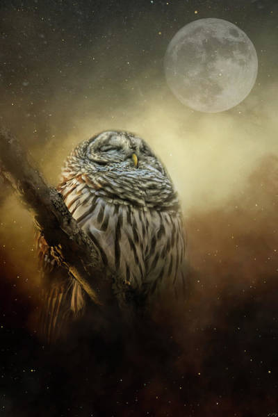 Photograph - Owl In The January Moon by Jai Johnson