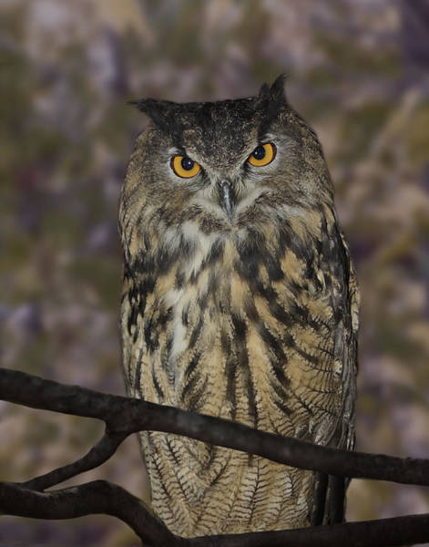 Photograph - Owl by Michele A Loftus