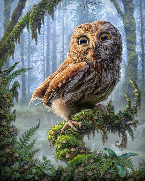 Oregon Wildlife Wall Art - Mixed Media - Owl Perch by Phil Jaeger