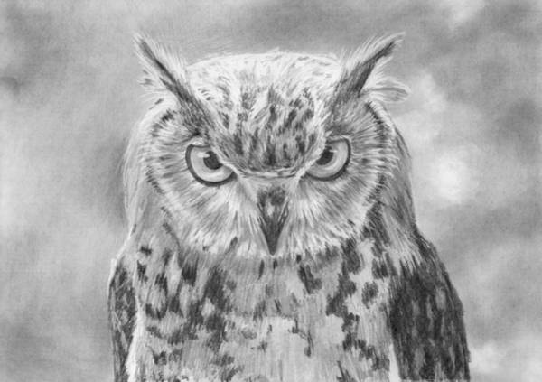 Nocturnal Drawing - Owl Portrait by Nolan Clark