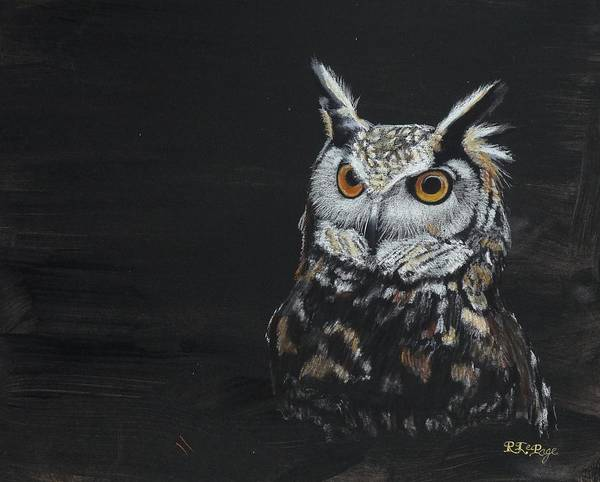 Pastel - Owl by Richard Le Page