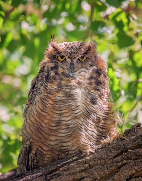 Photograph - Owl Scowl by Loree Johnson