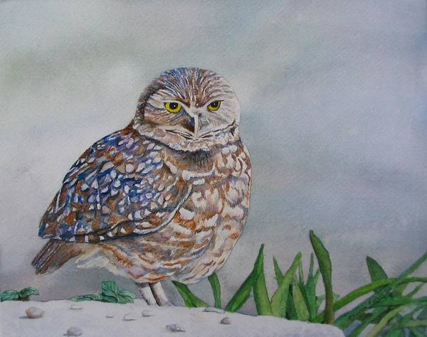 Burrowing Owl Painting - Owl by Sharon Farber