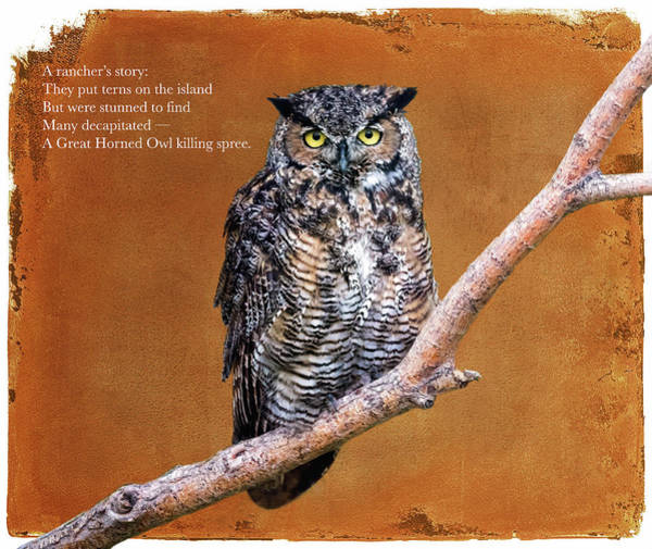 Japanese Poetry Wall Art - Digital Art - Owl Story by John Williams