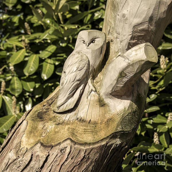 Church Stretton Wall Art - Photograph - Owl Tree  by Rob Hawkins