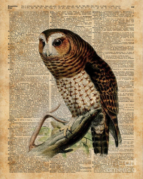 Wall Art - Digital Art - Owl Vintage Illustration Over Old Encyclopedia Page by Anna W